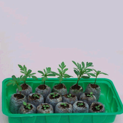 6pcs Peat Pellets Seed Starter Seedling 35mm Condense Soil Block Nursery RDR