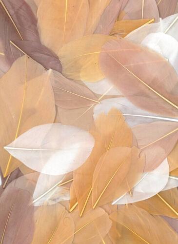 Graine créative Plumes coupées camaieu beige 10g 6cm