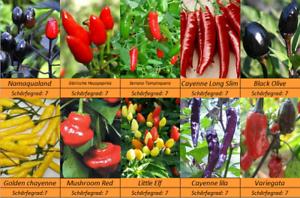 MASSENTRÄGER 10 Sorten Schärfe 7. Chili Pepperoni Samen Gewürzchili