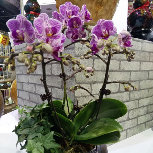 20Pcs Plant Fix Clips Orchid Stem Vine Support Flowers Tied Branch ClampinYNFK