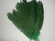 lot de 10 plumes pintade 18 cm verte