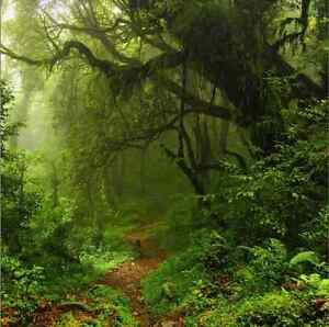10x10FT Tropical Rainforest Tree Path Custom Photo Background Backdrop Vinyl