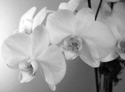 orchideen9294