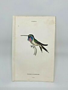 1st-Ed-Hand-colored-Jardine-039-s-Natural-History-1834-Cyan-Hummingbird-14