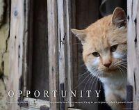 Cat Motivational Poster Art Print Kitten House Toys Pet Supplies Collar Mvp368