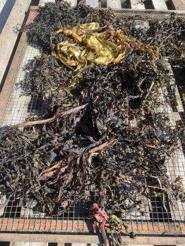 CharGrow Biochar fully loaded with EMC Micro-organism Fungi and Seaweed
