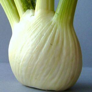 Légumes-Fenouil-Rondo 125 graines