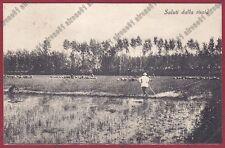 MONDINE 239 MONDARISO RISO RISAIA LAVORI AGRICOLI Cartolina viaggiata 1933 MEDE