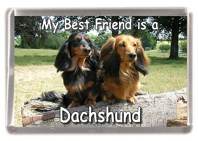 "Dachshund Dog Fridge Magnet /""My Guardian Angel is a DACHSHUND/"" by Starprint"