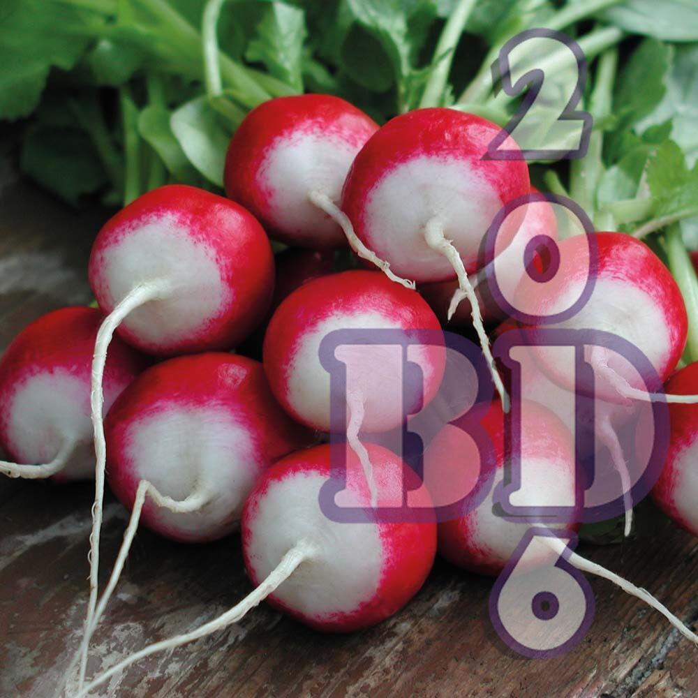 Cherry Belle Radish - White tip - Delicious - Vegetable - appx 500pcs Seeds_10