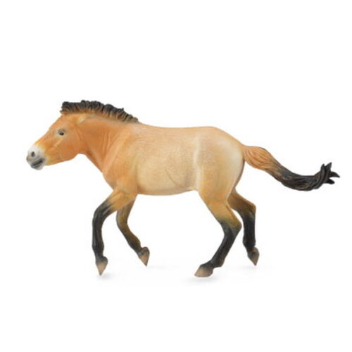 Collecta 88602 Przewalski Stallion Miniature Animal Figure Toy