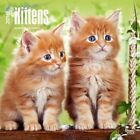 Kittens I Love 2016 Square 12x12 by Inc BrownTrout Publishers 9781465041357
