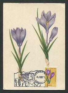 La Pologne Mk 1963 Flore Fleurs Flowers Maximum Carte Carte Maximum Card Mc Cm C9331-afficher Le Titre D'origine Activation De La Circulation Sanguine Et Renforcement Des Nerfs Et Des Os