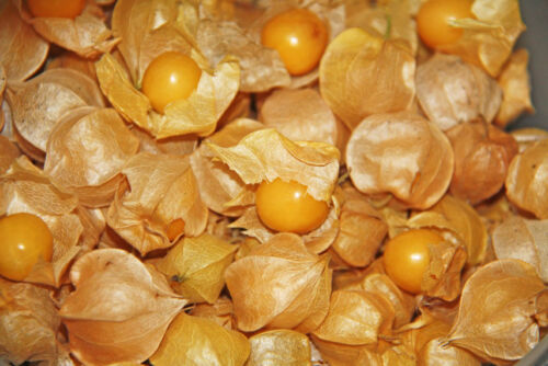 Ground Cherry Aunt Molly seeds HONEYSWEET and RICH! 20