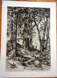 REDWOOD FOREST MUIR WOODS LANDSCAPE ~ Old 1888 Mary MORAN Art Print Etching RARE