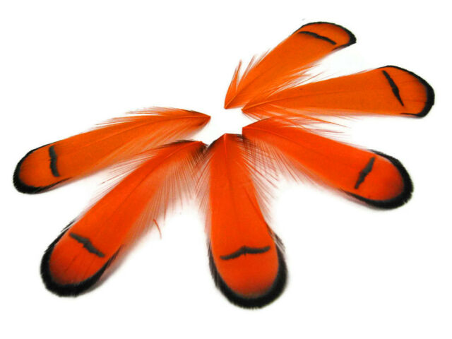 LIME Lady Amherst Pheasant tippet Feathers Jewelry Fly Tying Supplier 1 Dozen