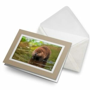 Greetings-Card-Biege-North-American-Beaver-Kit-Baby-15569