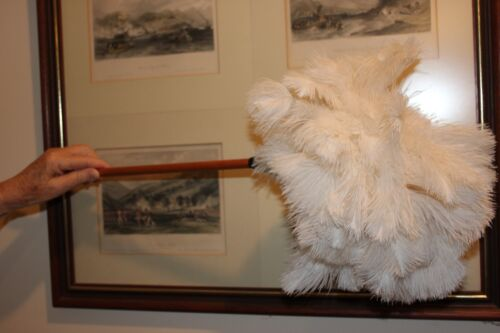 One soft white ostrich feather duster 65cm overall stained handle1st grade 1