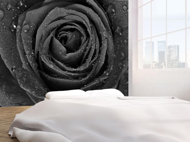 Wunderschön Rose mit Regen Tropfen Schwarz und Weiß Tapeten Wandbild (6350196)