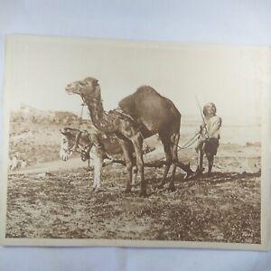 Photo-Flandrin-large-Heliograph-Editions-Mars-73-Maroc-le-depart-pour-labour