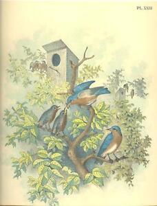 Vintage bird house paintings theme