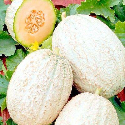 Vegetable Seeds Sweet Melon Cantaloupe Sharente F1 NON GMO