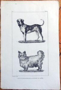1830s-French-Animal-Print-Le-Dogue-de-Forte-Race-Chien-de-Siberie-Siberian-Dog