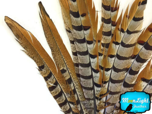 "18-20/"" NATURAL Reeves Venery Pheasant Tail Feathers 10 Pieces"