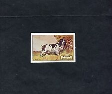 Jacobs reprint of 1930 Peterkin English Sporting Dogs card - The Cocker Spaniel