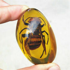 Beautiful Amber Hornet Fossil Insects Manual Polishing  ~~