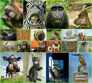 LUSTIGE-TIERE-Set-3-20-er-Tierpostkarten-Set-20-verschiedene-Ansichtskarten