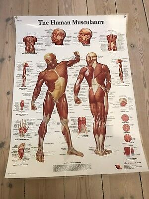 kroppens anatomi plakat