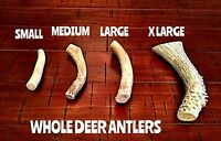Medium Deer Antler Dog Chew-free Shipping Your Dog Will Love This Treat