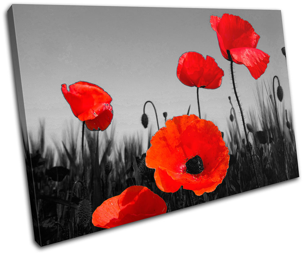 Poppies Flowers Floral SINGLE LONA pared pared LONA arte Foto impresion 31f94c