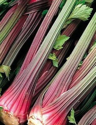 CELERY 'Red Stem' 200 seeds UNUSUAL red stalk vegetable garden SLOW BOLTING