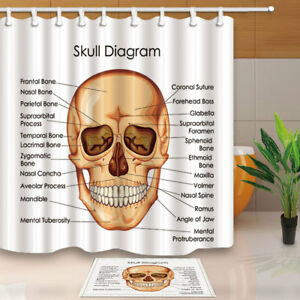 Image Is Loading Medical Biology For Human Skull Polyester Fabric Shower