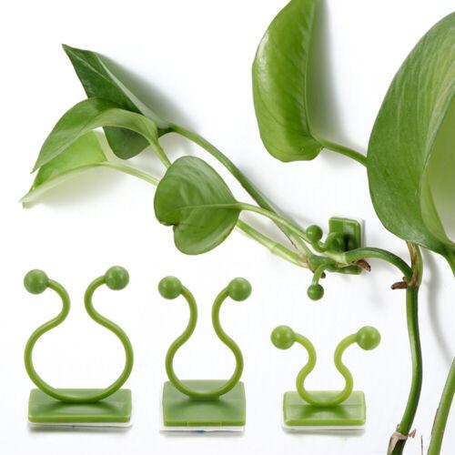 Bracket Hook Plants Holder Plant Clip Rattan Clamp Wall Vines Wall Sticky Hook