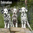 Dalmatian Puppies Calendar 2017 by Avonside Publishing Ltd. (Paperback, 2016)