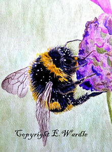 8ACEO-039-Bumble-Bee-039-Canvas-PRINT-of-Original-Watercolour-2-5-034-x-3-5-034-By-E-Wardle
