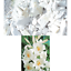 miniatura 18 - Ricarica Profumatore a bastoncino per ambiente di casa,Diffusore di Profumo.