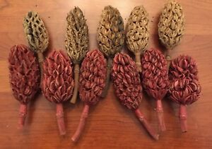 Lot of 12 MAGNOLIA SEED PODS for WREATHS//NATURE CRAFTS// HOLIDAY DECOR
