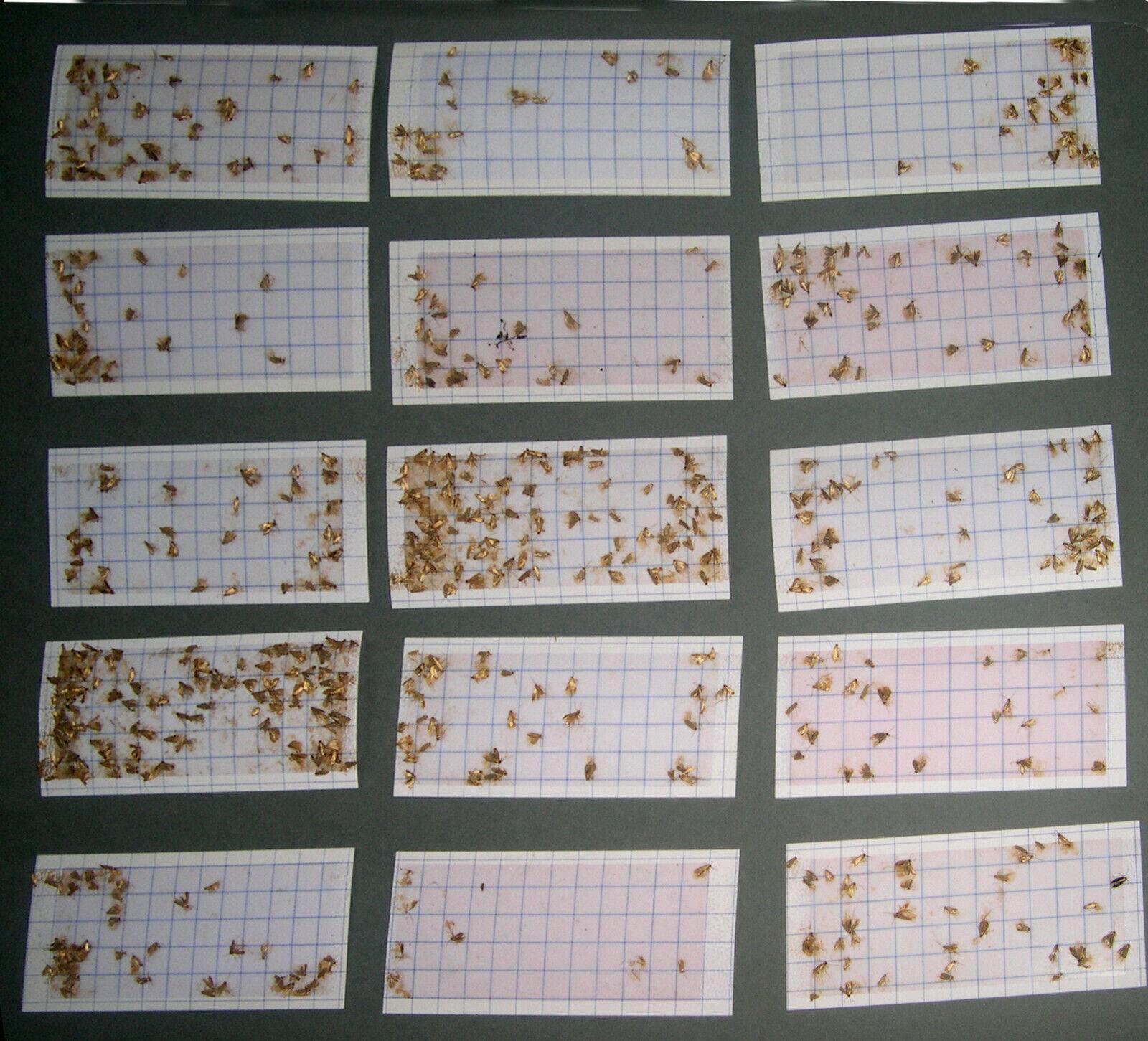 10 x DIAMOND CLOTHES MOTH TRAP PHEROMONE REFILLS- USE By APRIL 2025