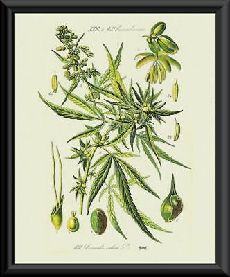1800s Hallucinogenic Mushroom Engraving Reprint On Fine Linen Paper *P136