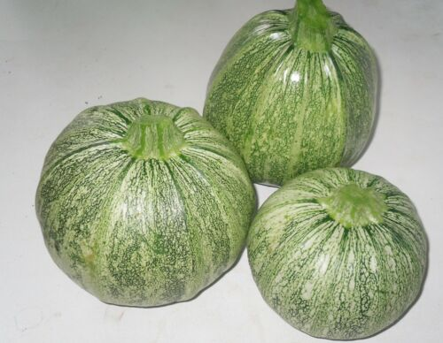 min 20 Samen Zucchini runde Nizza
