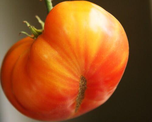 50 Tomato seeds big rainbow