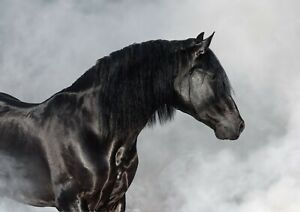 Black-Andalusian-Horse-Poster-Size-A4-A3-Stallion-Animal-Poster-Gift-12493
