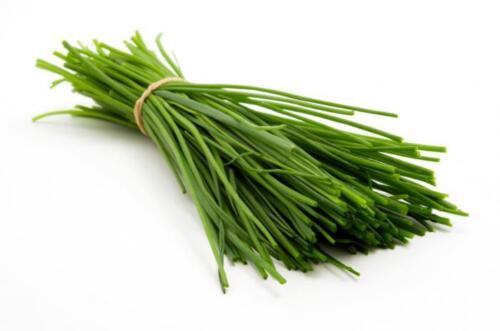 150 Graines de Ciboulail Méthode BIO seeds plantes aromatique légumes ancien
