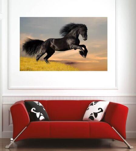 Affiche poster décoration murale Cheval réf 17900476 6 dimensions
