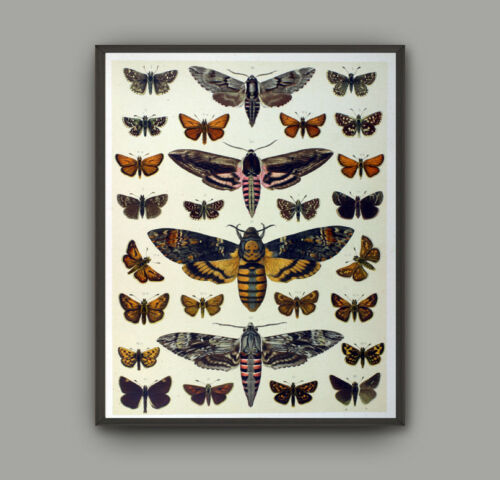 Framed Insets Botanical Canvas Print Vintage Poster Home Decor Wall Art