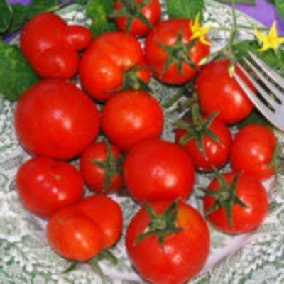 Vegetable - Tomato - Latah - 10 Seeds